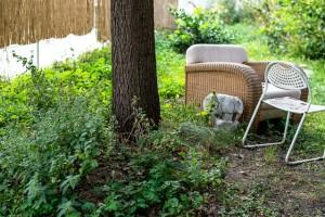Sessel im Gemeinschaftgarten