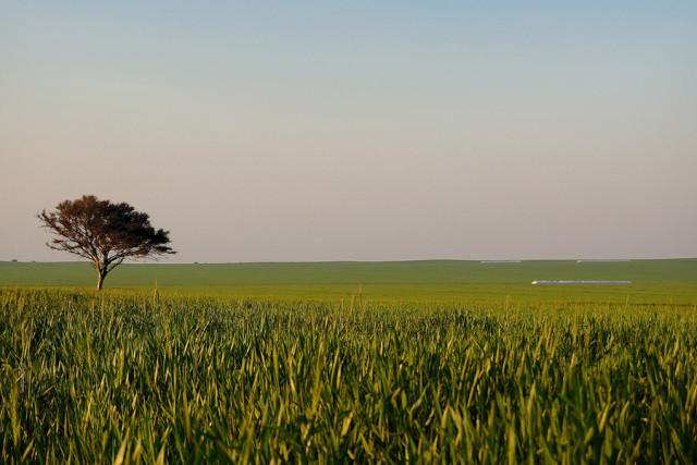 Ein Sojafeld in Los Altos, Catamarca in Argentinien (Foto: marcosHB, flickr.com, CC-BY-NC-ND 2.0)