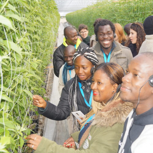 Die internationale Gruppe besichtigt ein Himbeergewächshaus